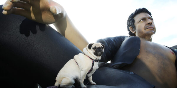 Leeloo the pug stunned to see 25ft statue of Jeff Goldblum unveiled on Potters Field today, as NOW TV celebrates Jurassic Park's 25th anniversary